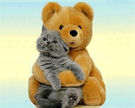 Teddy Bears, Cat, Bears Hug, Friends, Ted Talk, Bear Hugs