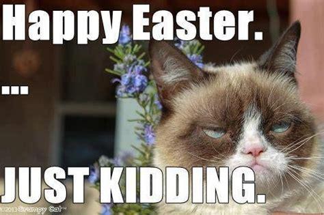 Happy Easter Meme - grumpy cat meme dauson stimpson gagnon