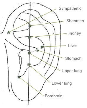 Acupuncture For Detox by 186 Best Images About Auri On Pressure Points