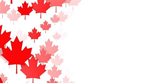 canada background loopable maple leafs white background canadian flag