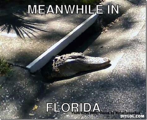 Gator Meme - funny florida gator memes