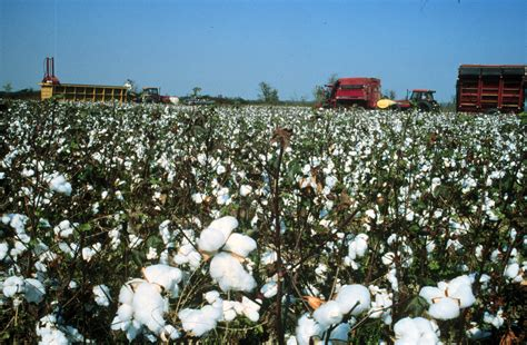 Cotton Land 1 7 1 crowley s ridge parkway all photos america s byways
