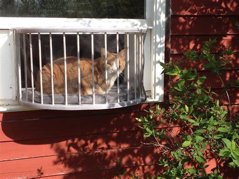 cat veranda window box cat veranda window box cat solarium