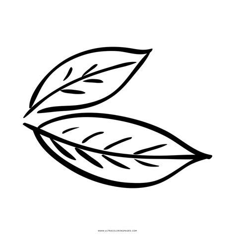 dibujos en hoja semilogaritmica dibujo de hoja de laurel para colorear ultra coloring pages