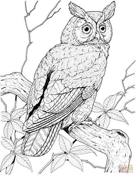 realistic owl coloring page perched long eared owl coloring page free printable