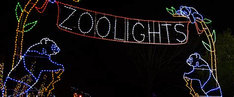 zoo lights washington guest post national zoolights and more