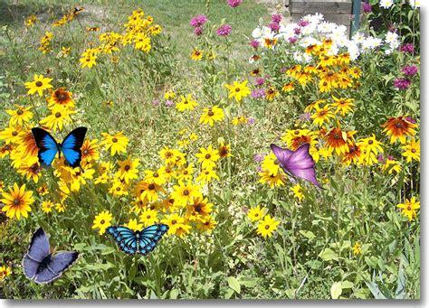 Butterfly Flower Garden 187 Blackhillsgarden Gardening Experience In