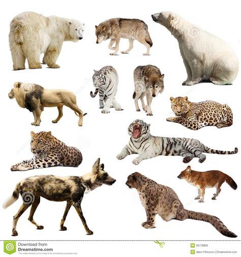 imagenes animales mamiferos mam 205 feros animales cr
