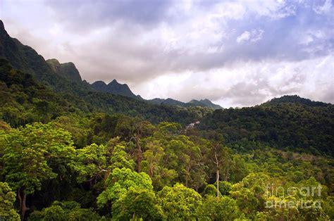 Jungle Landscape Pictures Jungle Landscape Photograph By Tim Hester