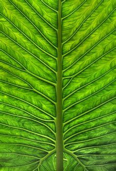 nature patterns human 1000 images about patterns and designs in nature on
