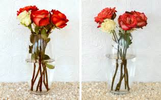 how to keep roses alive womans vibe
