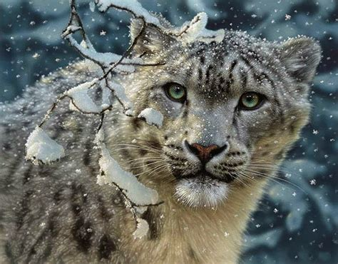 s leopard journey to the edge of time snow leopards an endangered
