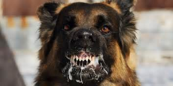 Dog Navy Seal Explains What To Do If You Re Attacked By A Dog