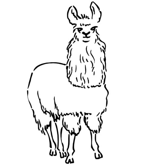 printable for kids com coloring pages llama printable for kids adults free
