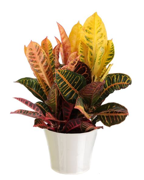 best houseplants common house plants hgtv