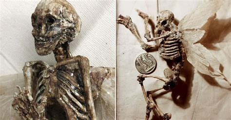 Mystery Of Winged Tiny Human Skeletons Found In
