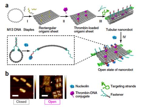 Dna Origami Nature - a dna based nanorobot to search and destroy cancer