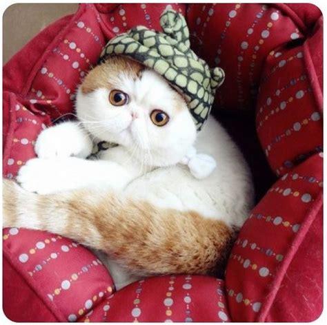 Mainan Kucing Cat It Senses Catit Desain Senses Scratch Pad 7 kucing yang menjadi viral di laman sosial seluruh dunia siputgondang