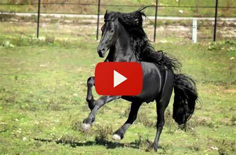Größte Pferd Der Welt by Dicen Que Este Es El Caballo M 193 S Hermoso Del Mundo Estuve