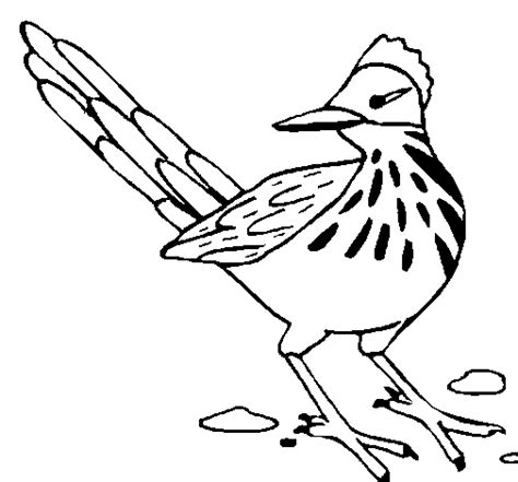 roadrunner bird coloring page roadrunner coloring page