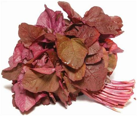 1 Gram Benih Bayam Merah resep sayuran bayam merah aneka resep indonesia