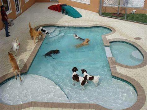 backyard dog pool pin by dena kolsky on dog lovers only pinterest