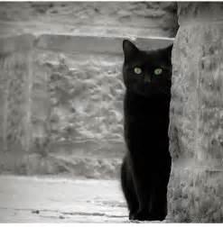 black cat best 25 black cats ideas on black kittens