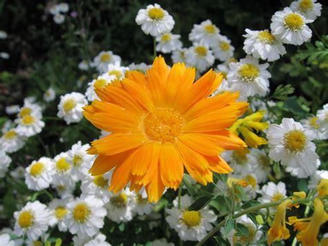 floral water file orange flower with water jpg