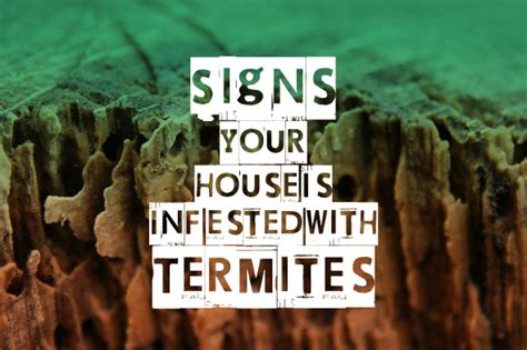 control your house 9 signs your house is infested with termites topbest blog