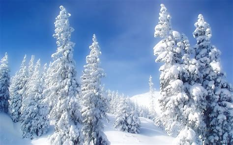 beautiful winter wonderland wallpaper  images