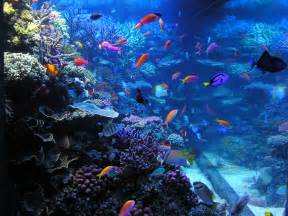 hours and prices as well as news and information about the aquarium