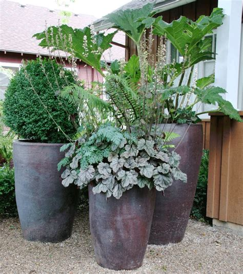 large potted plants for patio grounded design by