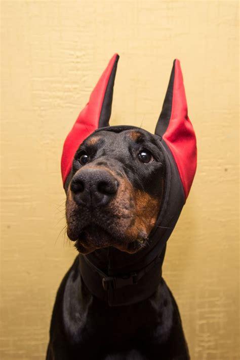 doberman winter hat doberman warmer dog hat dog