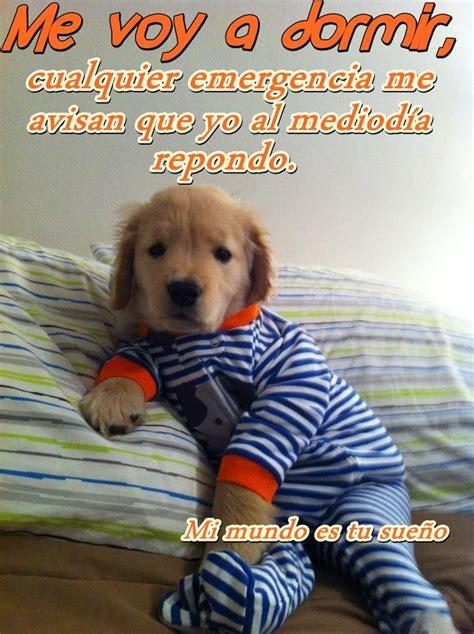 imagenes comicas de buenas noches imagenes de buenas noches para whatsapp perros