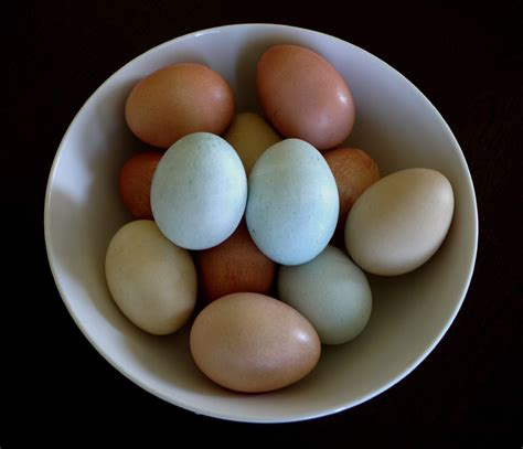 color of eggs category beautiful colors of easter eggs