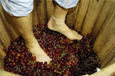 fare il vino in casa come fare il vino donna moderna