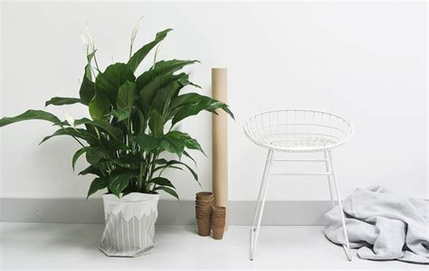 Sheer Curtains White 8 Super Cute Indoor Plants To Buy Now Sunshine Coast