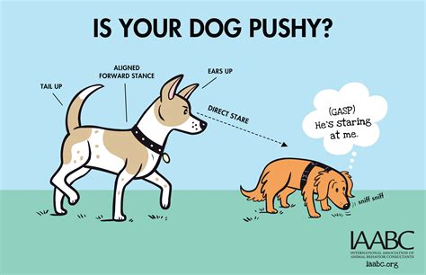 how to your to behave around other dogs language green acres kennel shop