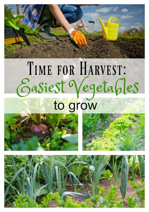 Time For Harvest The Easiest Vegetables To Grow In Your Easiest Garden Vegetables To Grow