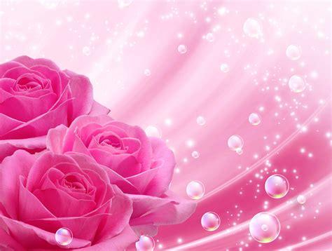 imagenes rosas wallpapers fondos de pantalla 2500x1890 rosas rosa color flores