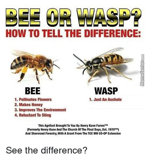 bee meme 25 best memes about bee wasp bee wasp memes