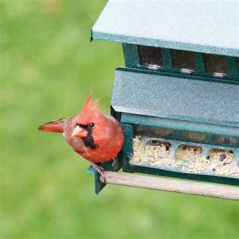 backyard bird feeding tips mother earth living healthy homes natural health green living