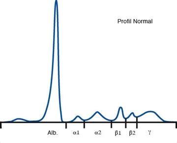 albumina alimenti elettroforesi delle proteine albanesi it