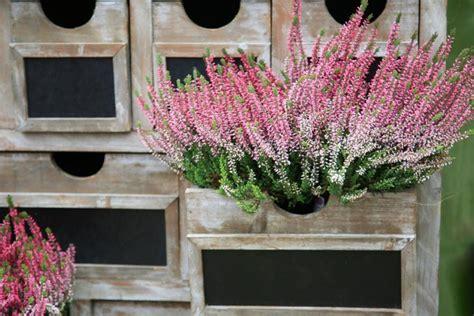 fiori da vaso invernali piante e fiori invernali donnad