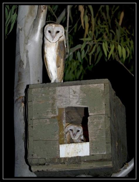 owl house best 25 owl house ideas on pinterest owl box nest box and rustic bird feeders