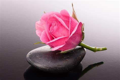 Bilder Mit Steinen Und Blumen by Foto Rosa Farbe Blumen Steine