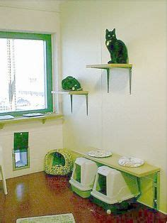 Cat Room Ideas by 1000 Images About Inspiration Cat Room On