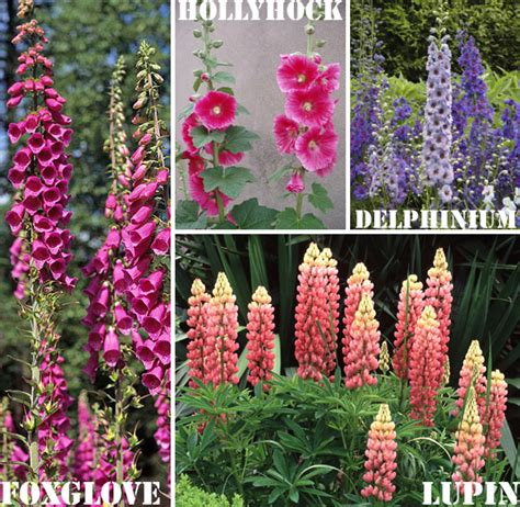 Cottage Garten Pflanzen by Cottage Garden Plants Cottage Garden Perennials