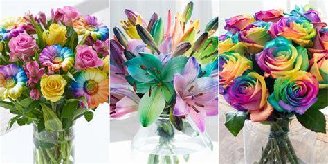 rainbow flowers  multicoloured blooms