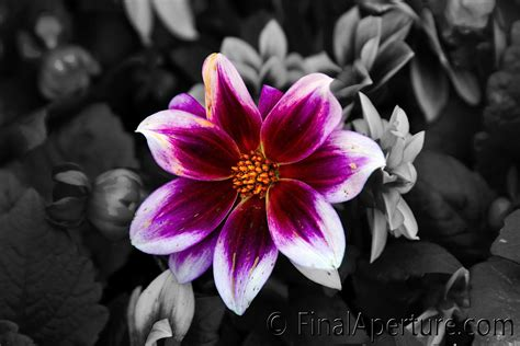 black and white photo with color black and white photography with color search